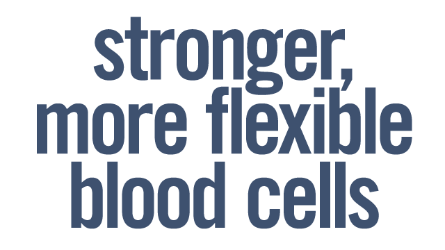 Stronger, More Flexible Blood Cell Membranes