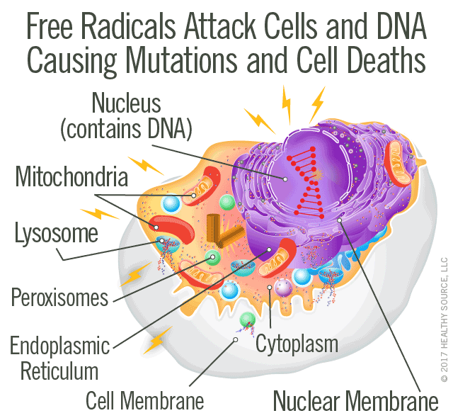 Free radicals attack and destroy cells and their DNA. Diagram shows free radical steals an electron from DNA and thereby damages DNA.