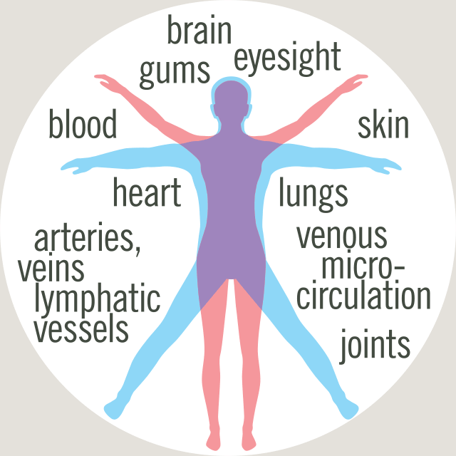 collagen distribution in the body: brain, gums, eyes, blood cells, skin, lungs, venous micro-circulation, joints, arteries, veins, lymphatic vessels
