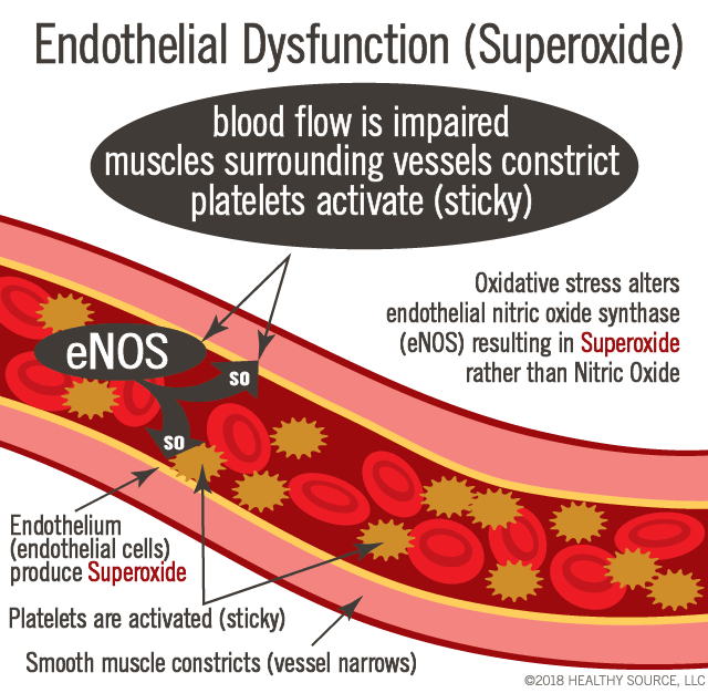 When endothelial dysfunctions, the endothelial cells produce superoxide instead of nitric oxide. Blood flow decreases, muscles surrounding vessels constrict, platelets activate (sticky)
