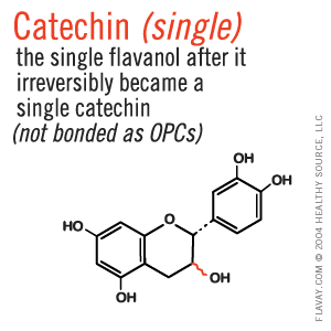 Catechin: the single flavanol after it irreversibly became a single catechin, not bonded as OPCs.