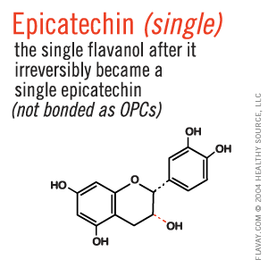 Epicatechin: the single flavanol after it irreversibly became a single epicatechin, not bonded as OPCs.