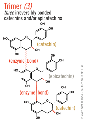 Trimer: three irreversibly bonded catechins and/or epicatechins.