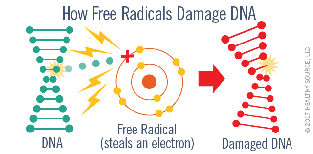 Free radicals damage DNA. Diagram shows free radical steals an electron from DNA and thereby damages DNA.