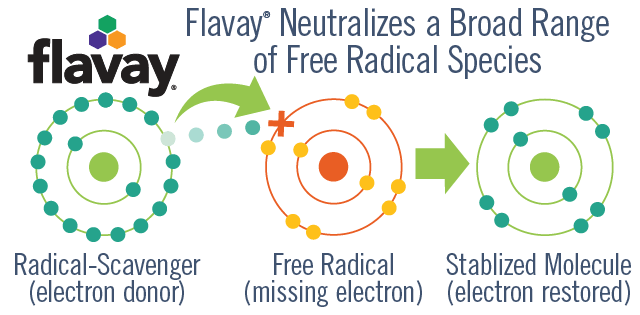 Flavay plus a free radical equals a stabilized molecule. Flavay is a radical scavenger and rich electron donor. Free radical is a molecule with a missing electron. Stabilized molecule is now stable because its missing electron is restored. Diagram shows Flavay donating an electron to a free radical to create a stabilized molecule from the free radical.