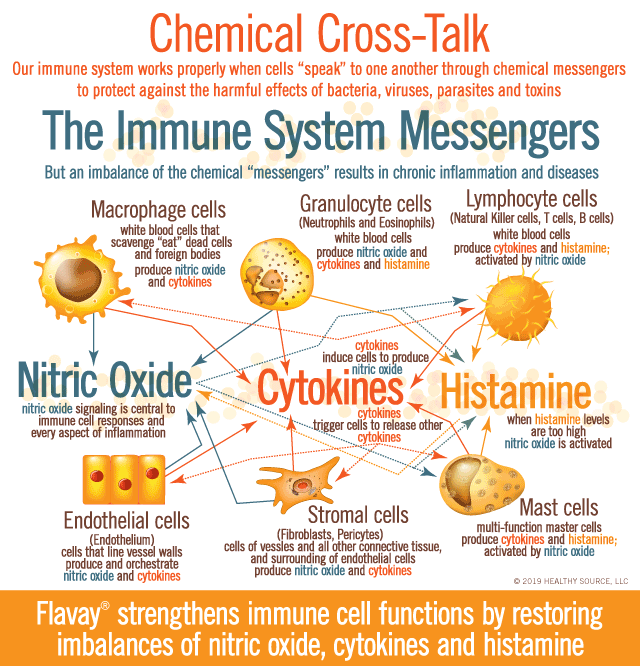 Messengers of the Immune System: Nitric Oxide, Cytokines and Histamine. Graphic shows chemical cross-talk between these chemical messengers with various white blood cells, endothelial cells (cells in vessel walls) and fibroblast cells (cells in connective tissue). Nitric oxide regulates immune responses and mast cell activation and every aspect of inflammation. So tight control of these chemical messengers is essential for a healthy immune system.