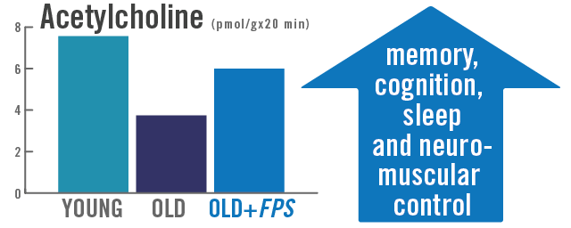 Chart of young versus old shows supplementation with Flavay Plus restores a healthy supply of acetylcholine. Acetylcholine is a brain transmitter essential to memory, cognition, sleep and neuromuscular control.