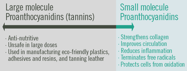Large, poly, proanthocyanidins, also known as tannins, are antinutritive, unsafe in large doses, used in manufacturing exo-friendly plastics, adhesives and resins, and tanning leather. Small, oligo, proanthocyanidins strengthens collagen, improves circulation, reduces inflammation, terminates free radicals, protects cells from oxidation.